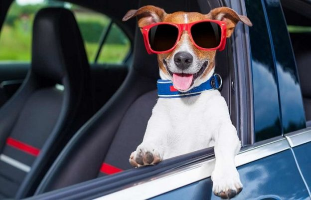 Car hire in Denia with pets